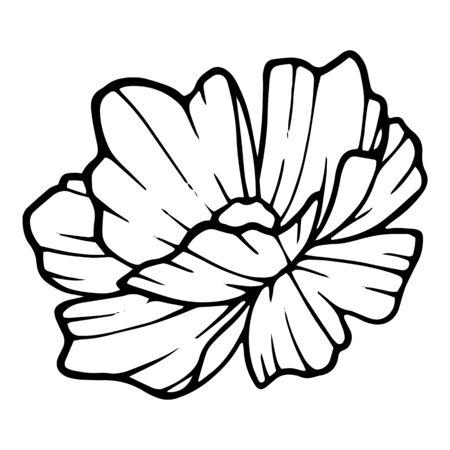 Cute peony garden flower icon. Hand drawn illustration of cute peony garden flower vector icon for web design