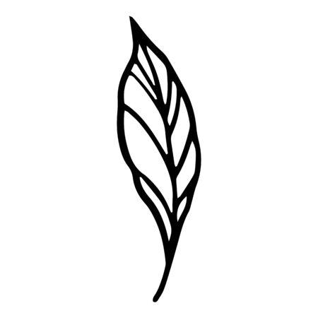 Season plant leaf icon. Hand drawn illustration of season plant leaf vector icon for web design