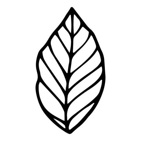 Park tree leaf icon. Hand drawn illustration of park tree leaf vector icon for web design