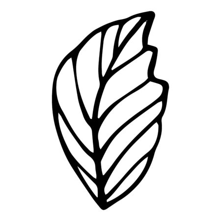 Eco natural leaf icon. Hand drawn illustration of eco natural leaf vector icon for web design