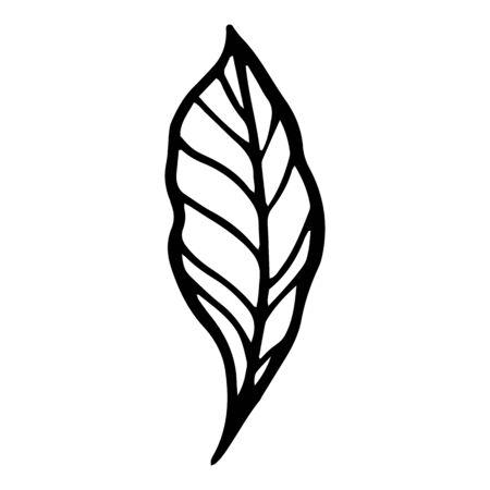 Nature summer leaf icon. Hand drawn illustration of nature summer leaf vector icon for web design