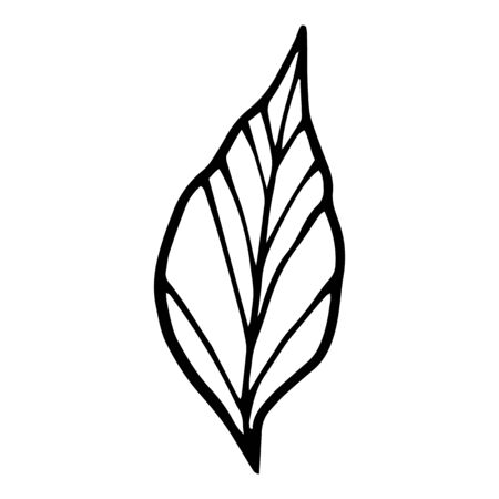 Spa plant leaf icon. Hand drawn illustration of spa plant leaf vector icon for web design