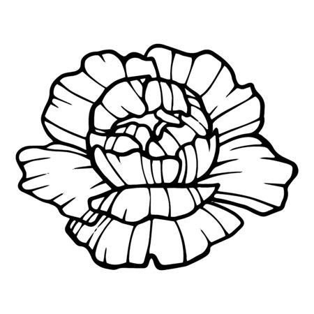 Romantic peony flower icon. Hand drawn illustration of romantic peony flower vector icon for web design Ilustração