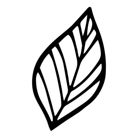 Natural plant leaf icon. Hand drawn illustration of natural plant leaf vector icon for web design
