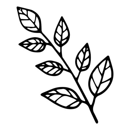 Eco natural branch leaf tree icon. Hand drawn illustration of eco natural branch leaf tree vector icon for web design Ilustração