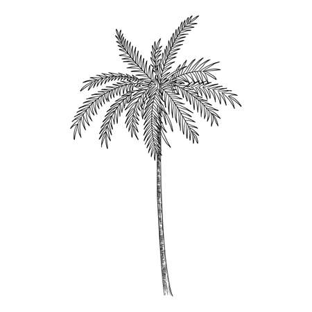Palm tree icon, hand drawn and outline style