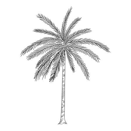 Palm icon, hand drawn and outline style