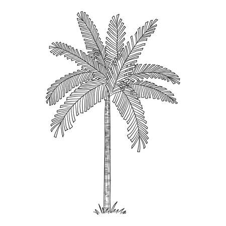 Tropical palm icon, hand drawn and outline style