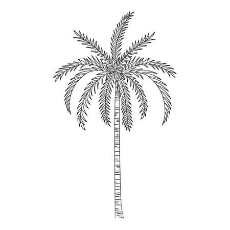 Sea palm icon, hand drawn and outline style