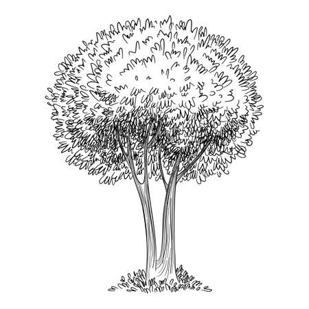 Tree icon, hand drawn and outline style 向量圖像