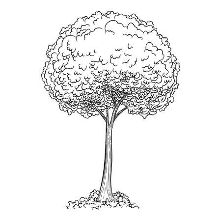 Young tree icon, hand drawn and outline style