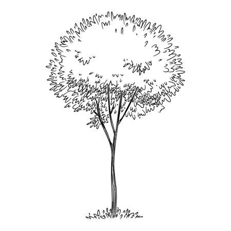 Forest tree icon, hand drawn and outline style Ilustração