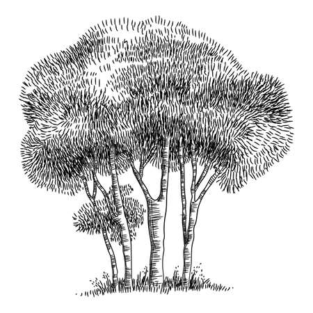 Field trees icon, hand drawn and outline style Ilustração