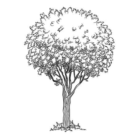 Old tree icon, hand drawn and outline style