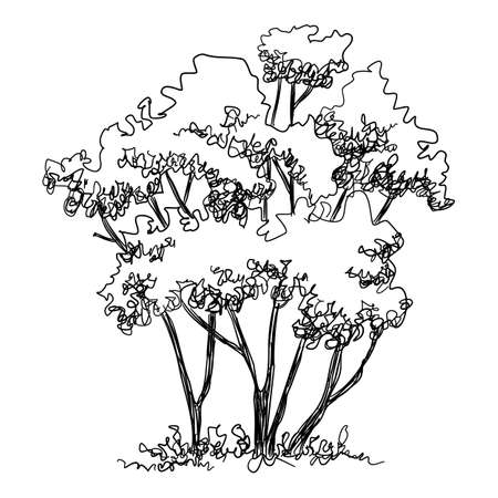 Thin tree icon, hand drawn and outline style Ilustração