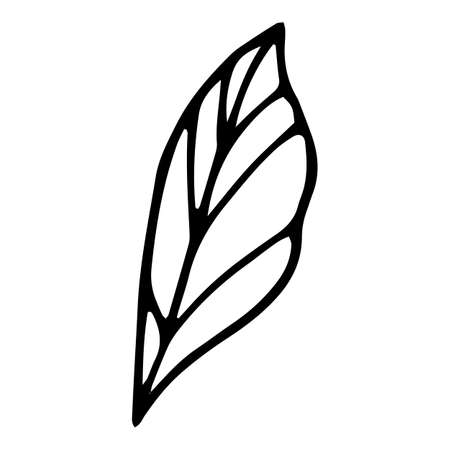 Eco leaf icon, hand drawn and outline style 矢量图像