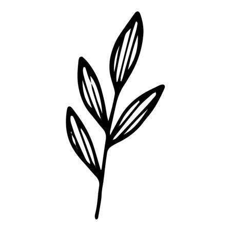 Garden leaf branch icon, hand drawn and outline style