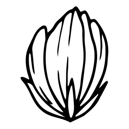 Cutted poppy icon, hand drawn and outline style