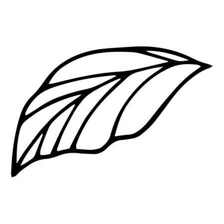 Bio leaf icon, hand drawn and outline style 矢量图像