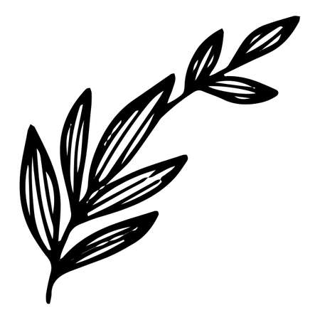Long leaf branch icon, hand drawn and outline style