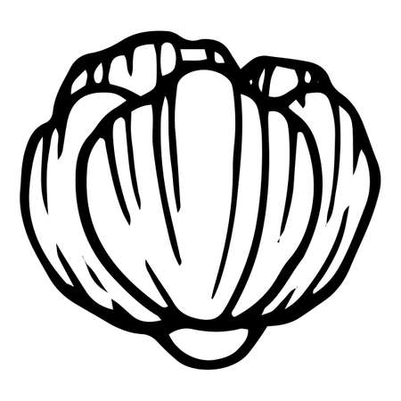 Garden poppy icon, hand drawn and outline style