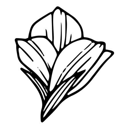 Farm poppy icon, hand drawn and outline style 矢量图像
