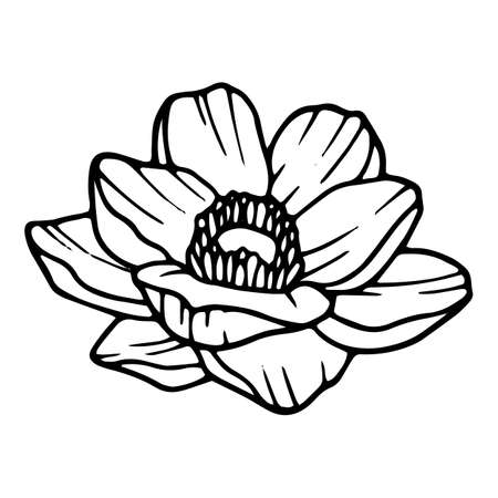 Beautiful poppy icon, hand drawn and outline style 矢量图像