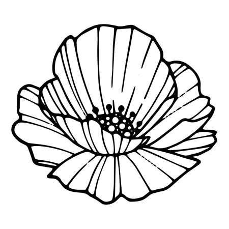 Forest poppy icon, hand drawn and outline style