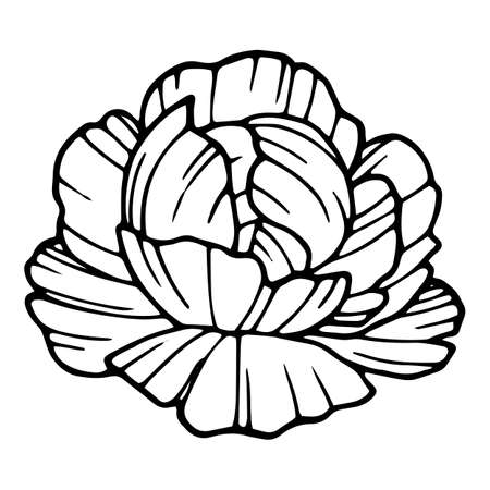 Poppy flora icon, hand drawn and outline style 矢量图像