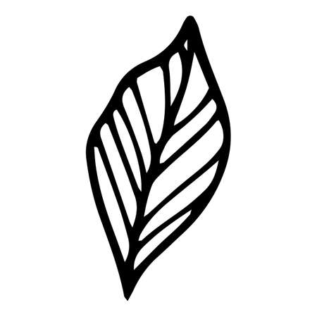 Flat leaf icon, hand drawn and outline style
