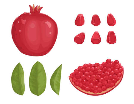 Pomegranate hand drawn and realistic style on white background, isolated red fruit whole, half, with leaves. colorful cartoon style illustration.