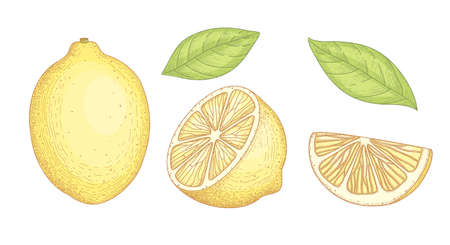 Collection of detailed drawings of whole and cut lemons with slice and leaves isolated on white background. Bright yellow citrus fruit. illustration hand drawn realistic in elegant vintage style.
