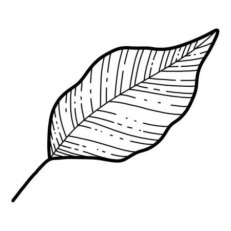 Free hand Sakura flower leaf vector, Beautiful line art Peach blossom leaves isolate on white background. Realistic hand drawn style