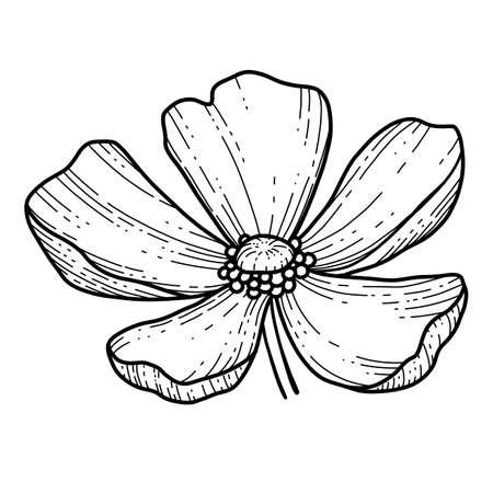 Free hand Sakura flower vector, Beautiful line art Peach blossom isolate on white background. Spring japan flower. Realistic hand drawn style