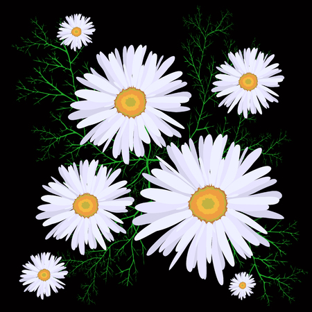 Seamless pattern white daisies on a black background