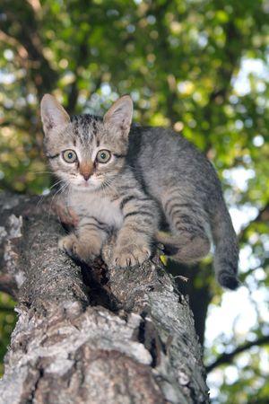 fluffy little playful cat in grass photo