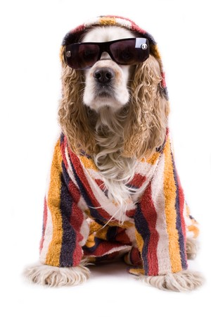 cute dog on a white background dressed up with clothes