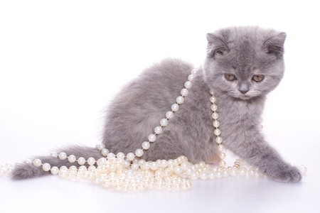 perls: little kitty with pearls on a white background