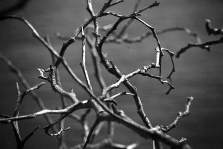 Twigs in black and white photo