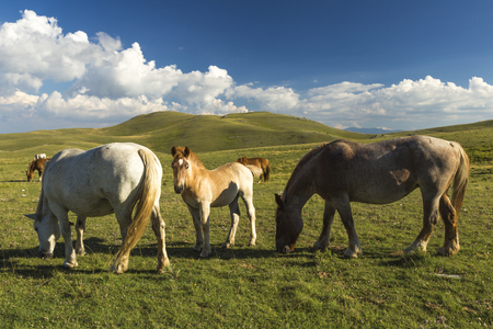 Brown foal next to His herd under a blue sky Stock Photo