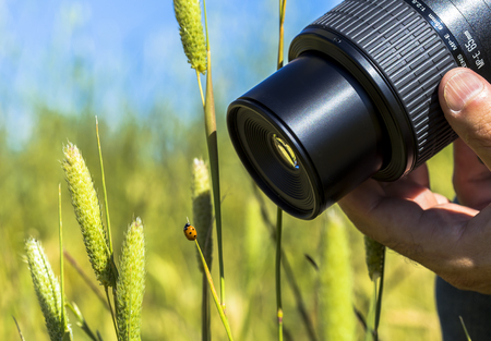 ladybug: Ladybug on a grass and a photographer catching her
