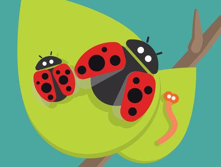 ladybug: Ladybug family on green leaf vector illustration Illustration