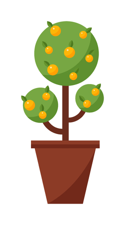 growing plant: Orange tree isolated on white background and orange tree vector nature fruit tree. Garden green orange tree design and orange tree agriculture natural plant. Sweet summer tangerine green tree.