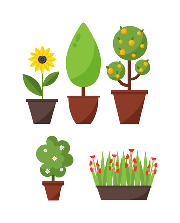 home gardening: Home bush plant in pot culture on white background and set of indoor home plant and tree in pots. Home pot plant and tree plants with flowers and leaves. Botany gardening flower home plant and tree.