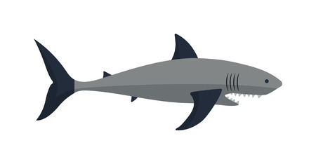 fear illustration: Cartoon shark vector illustration. Cool flat shark. Vector illustration with cartoon shark. Danger shark ocean character. Cartoon underwater shark marine animal. Big fish shark fish isolated. Illustration