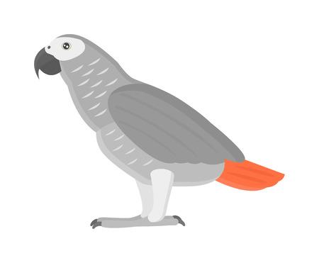 ara: Cartoon parrots bird and parrot wild animal bird. Tropical parrot feather zoo birds tropical fauna macaw flying ara. Various cartoon exotic bird with parrots illustration vector