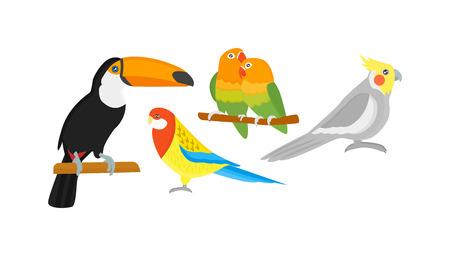 guacamaya caricatura: De dibujos animados loros p�jaros y loros p�jaros de animales salvajes. loros tropicales de la pluma de las aves de zoo fauna tropical Macaw Ara volando. dibujos animados Vaus aves ex�ticas establecidas con los loros ilustraci�n vectorial Vectores