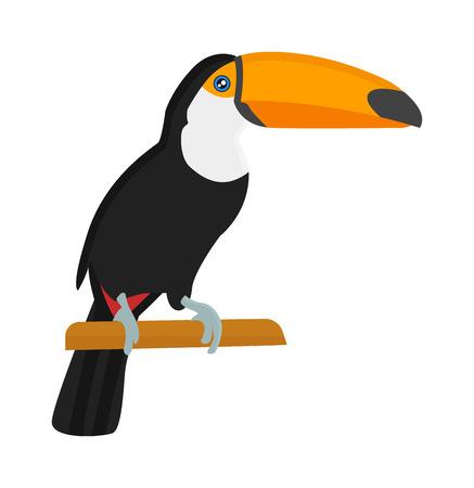 ara: Cartoon toucan bird and toucan wild animal birds. Tropical parrot toucan feather zoo birds tropical fauna macaw flying ara. Various cartoon exotic bird toucan illustration vector