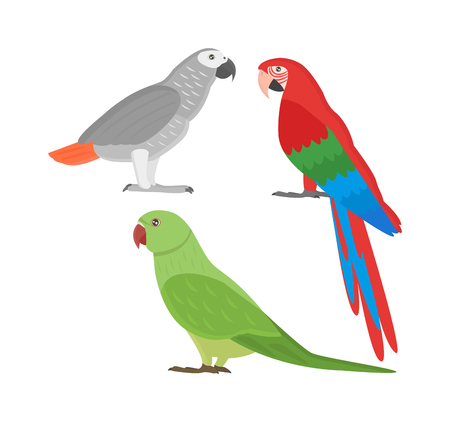 Cartoon parrots set and parrots wild animal birds. Tropical parrots feather zoo birds tropical fauna macaw flying ara. Various cartoon exotic birds set with parrots illustration vector Çizim