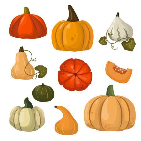 calabaza caricatura: colección de otoño de calabaza conjunto de elementos de diseño con diferentes calabazas ilustración vectorial agridulce oriental. Anaranjado de la calabaza establece colección vegetal. Decoración simbolo temporada de cosecha.